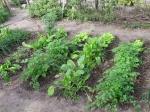 encuentro_agroecologiactes055
