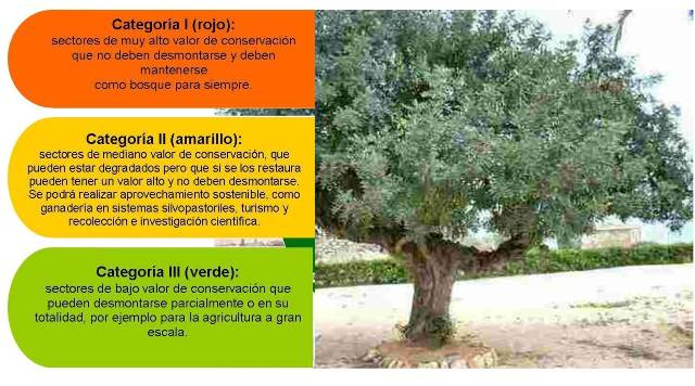 bosques-colores2chica.jpg
