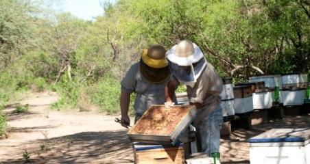 apicultura cordoba