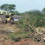 Salta: Más desmontes en áreas protegidas