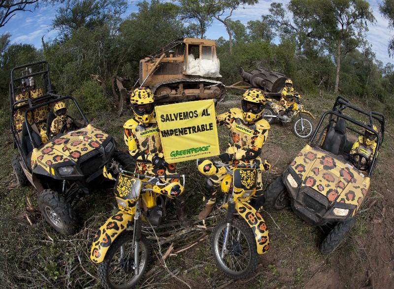 Jaguares de Greenpeace paran desmontes en el Chaco