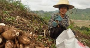 Hambrientos de tierra: Indígenas y campesinos alimentan al mundo con menos de un cuarto de la tierra agrícola mundial