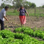 Agricultura Familiar pierde territorios: La tierra, en pocas manos