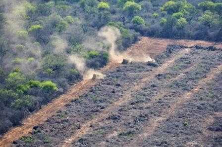 Resultado de imagen para formosa argentina bosques e indigenas