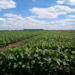 Campesinos paraguayos denuncian afectaciones a la salud y a cultivos por agrotóxicos